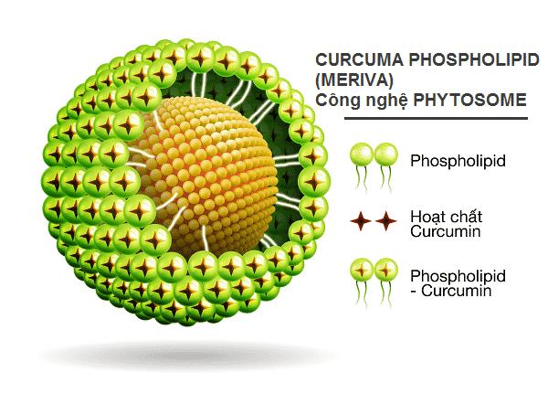 Physotome Curcumin, Curcumin Italy, Meriva, chữa tái phát viêm loét dạ dày, tá tràng, công nghệ phytosome, công nghệ phytosome, curcuma phospholipid, curcumin, curcumin phytosome, curcumin sinh khả dụng cao, Immunepath IP, Indena, Italy, Lactobacillus paracasei, liền viết loét nhanh, Meriva, phytosome, phytosome curcumin, bệnh loét bao tử, bệnh viêm tá tràng, cách chữa bệnh viêm loét dạ dày, cách chữa loét dạ dày