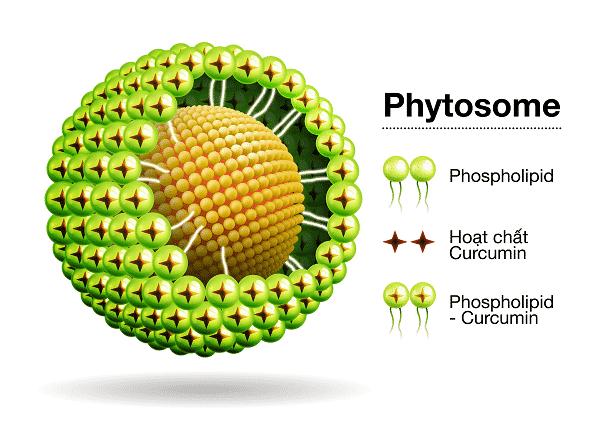 Giới thiệu Công nghệ Phytosome