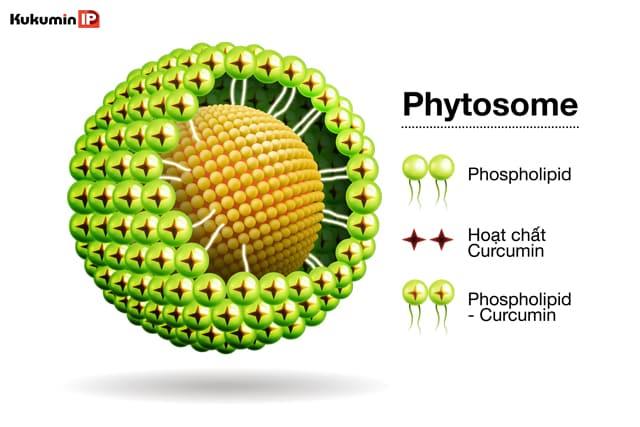 curcuma phospholipid, curcumin phytosome, công nghệ phytosome, Kukumin IP, Meriva, Indena Italy