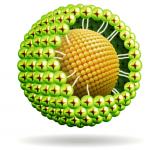 Công nghệ Phytosome – các ưu điểm và phương pháp sản xuất
