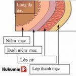 Cảnh giác với 6 dấu hiệu của sa niêm mạc dạ dày