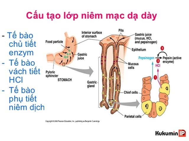 mot so thuoc bao ve niem mac da day