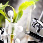 Đối phó tình trạng vi khuẩn Hp kháng kháng sinh bằng liệu pháp từ thiên nhiên