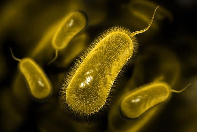 vi khuẩn Hp kháng kháng sinh