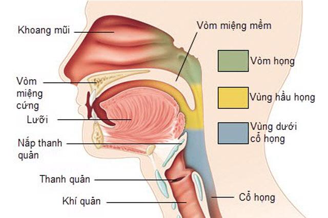 Viêm họng do trào ngược thực quản